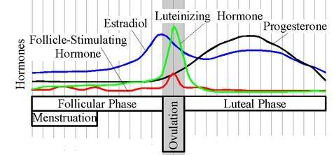 female hormones cycle fertility