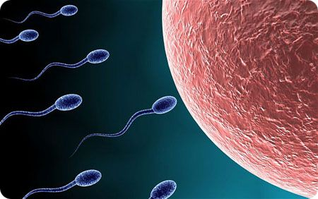 improve male fertility