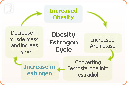 weight estrogen relation